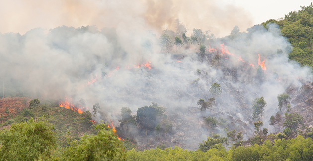 Fires ravage a forest in Vietnam. - Photo: Shutterstock