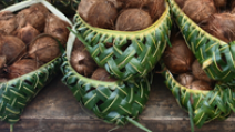 Coconuts lined up in a leafy basket in Tonga. - Photo: Shutterstock